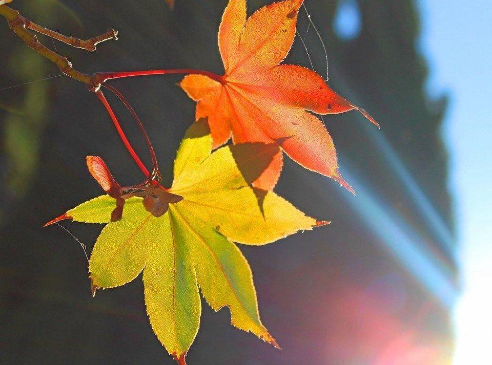 Autumn in Toowoomba