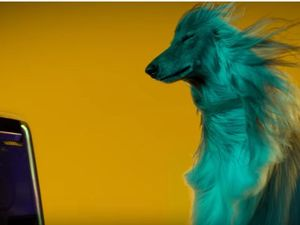 Beyonce or Beethoven? What gets your dog moving?