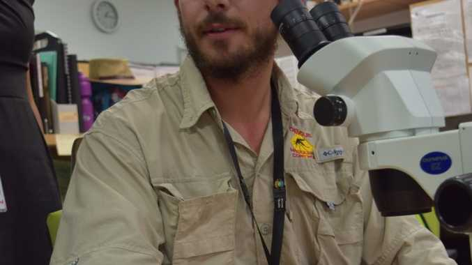 Vector Control Officer Gareth Ehlers identifies a mosquito caught in the South Mackay area. Photo: Emily Smith