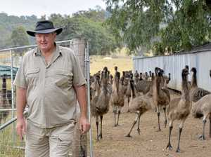 How an Ipswich businessman built an empire on emu oil