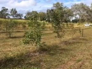 Farmer shows off forestry trial site