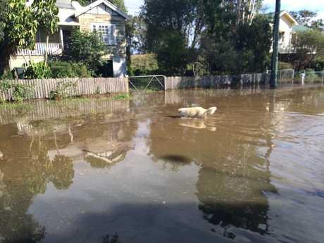 Lismore flooding, June 5, 2016.