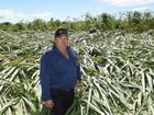 Rain and wind is good and bad for canegrowers
