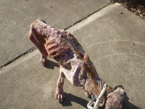 Couple in court as dog found emaciated, covered in sores