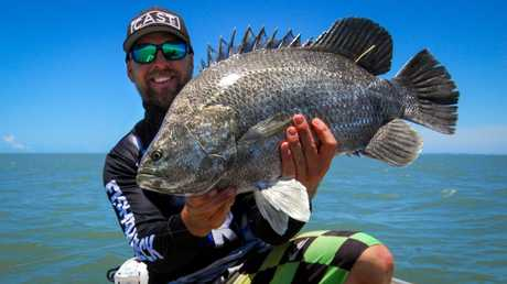 Fast facts what you should know about the triple tail for Triple tail fish