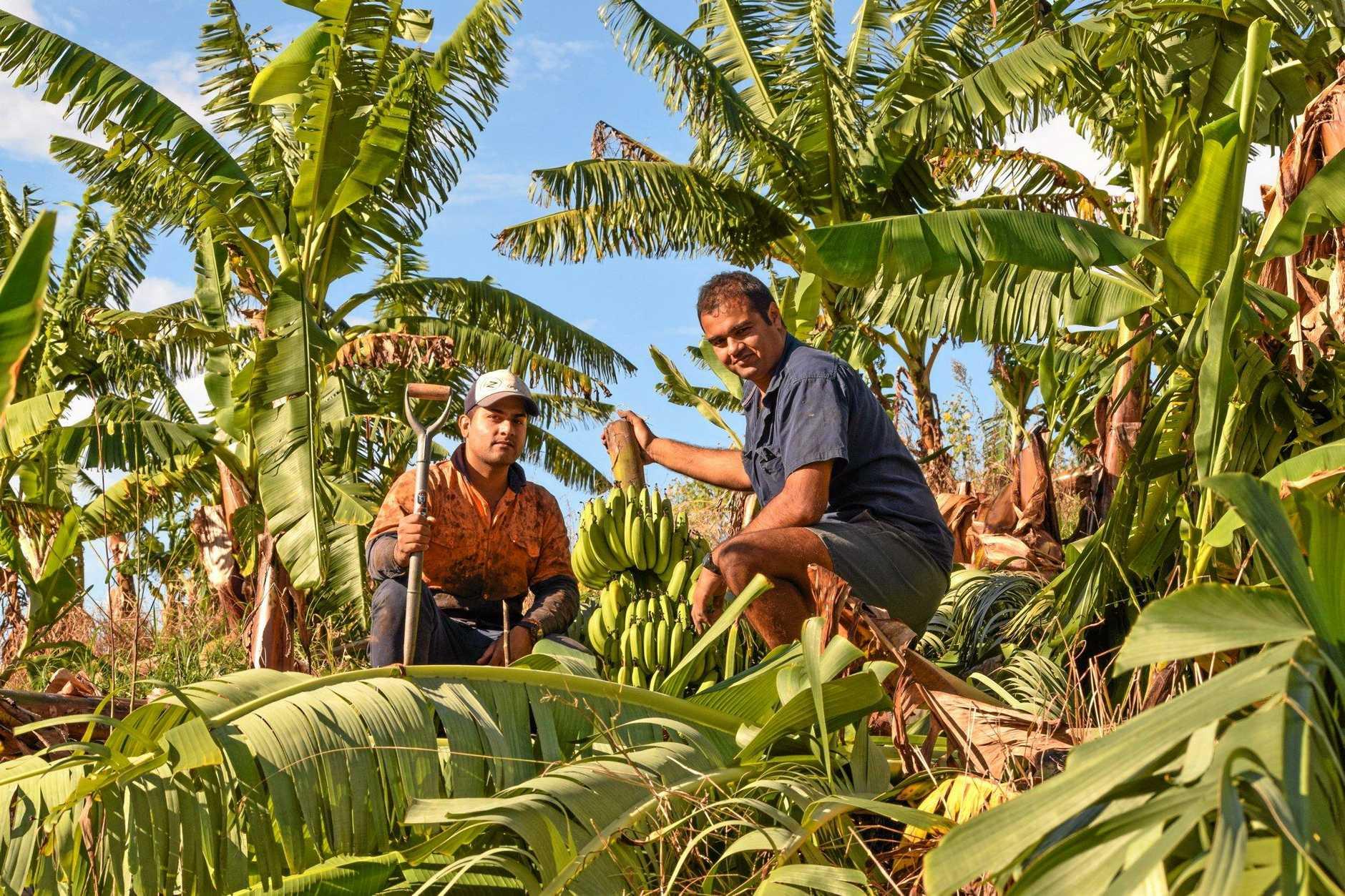 LOSS: farmer Paul Shoker assessing the damage on his farm with Amarjot Khatker in West Korora.