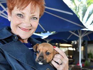 Pauline Hanson backs Donald Trump's Mexican wall