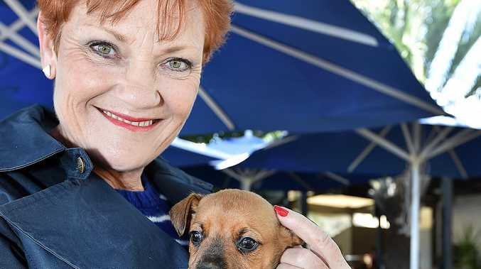 One Nation senate candidate Pauline Hanson with 6 week old boxer cross Paulie from the Wide Bay Animal Rescue.Photo: Alistair Brightman / Fraser Coast Chronicle