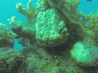 Damaged reefs at Lizard Island.