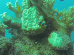 Coral Bleaching on Great Barrier Reef