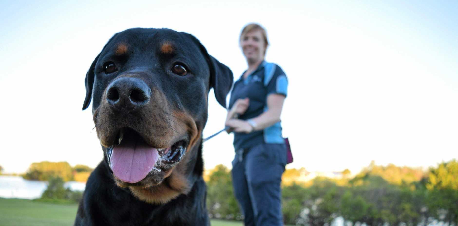 GOOD BOY: Dog trainer Tenille Williams says rottweilers like Diesel get a bad rap.