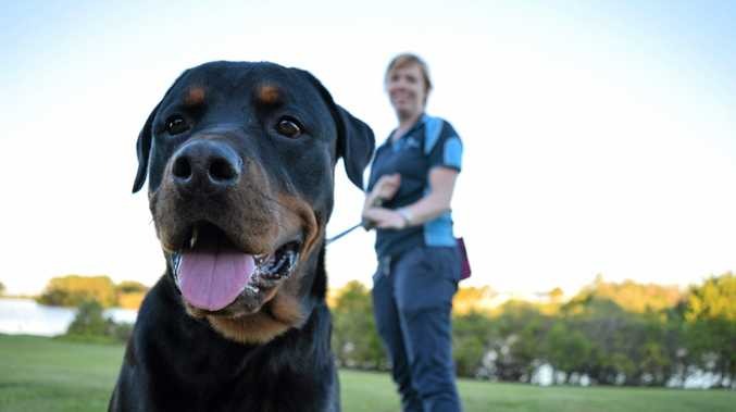 GOOD BOY: Dog trainer Tenille Williams says rottweilers like Diesel get a bad rap.