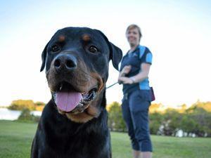 Dog bites a daily danger as incidents in Bundaberg rise
