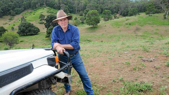 Chris De Vere and his decimated pasture at Melawondi that has been eaten out by lawn grubs or army worms.