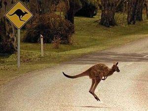 Wildlife involved in 20% of rural crashes
