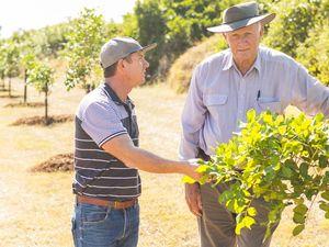 Tree-planting to restore Livingstone's beauty post Marcia