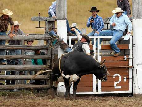 BULL RIDE: David Mawhinney was barely lucky to make it out of the gate before being ejected off this bull. File picture.