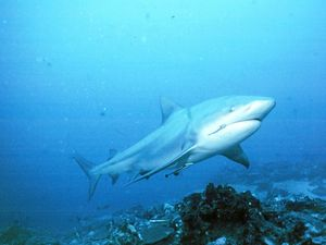 SHARK WARNING: 11 ways to avoid becoming shark bait