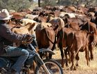 A new cattle tick line in Queensland has been welcomed by Agforce.