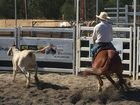 Calliope racetrack come alive with campdraft aplenty