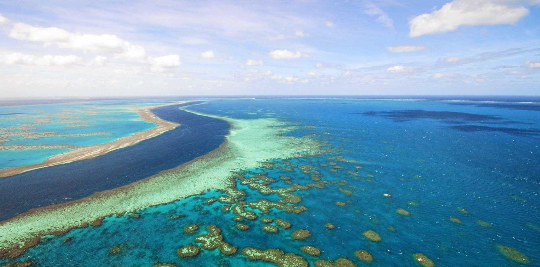 CONCERNS: Agforce comments on the reef trigger concerns.