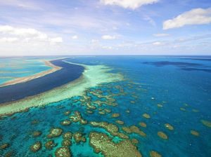 LETTER: AgForce comment on reef brings response