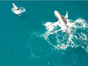 Whale watching caught on a drone