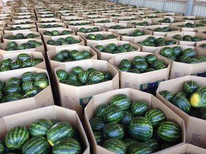 Farmer slams claims of 'toxic watermelons'