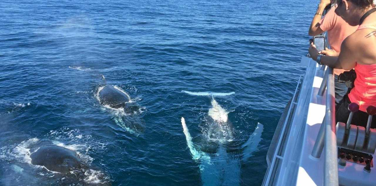 SPOTTED: Humpback whales have started their migration journey and are passing through Bundaberg waters now.