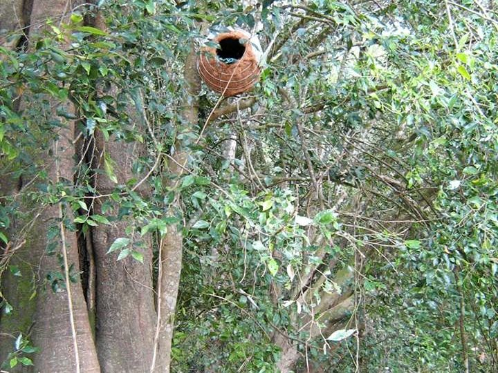 You can easily provide an alternative home for animals by making or purchasing a wildlife box.