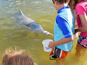 World Heritage site extension may end dolphin feeding