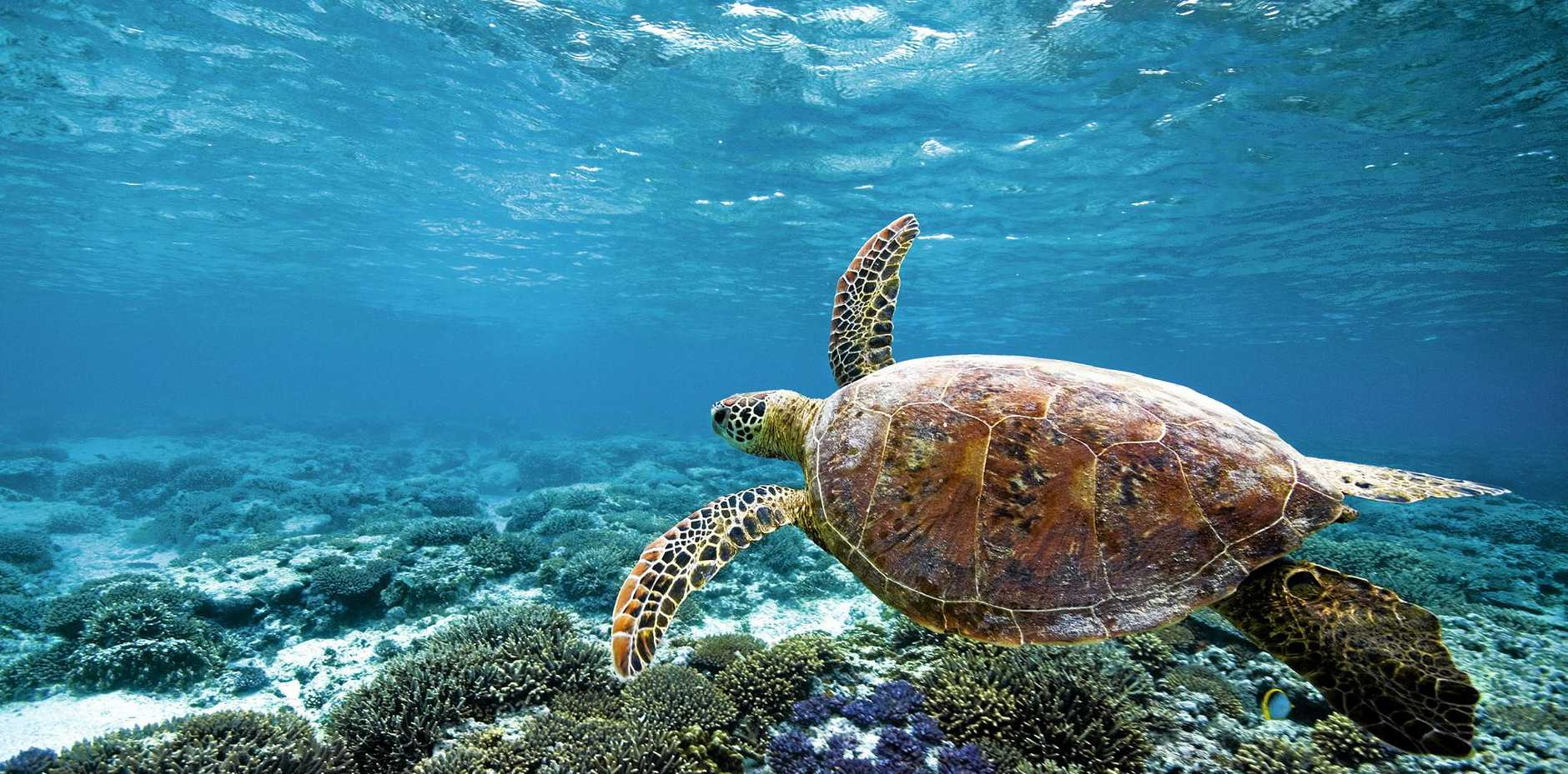 FLIPPING GOOD NEWS: More visitors are coming to the Southern Great Barrier Reef region, and they're spending more.