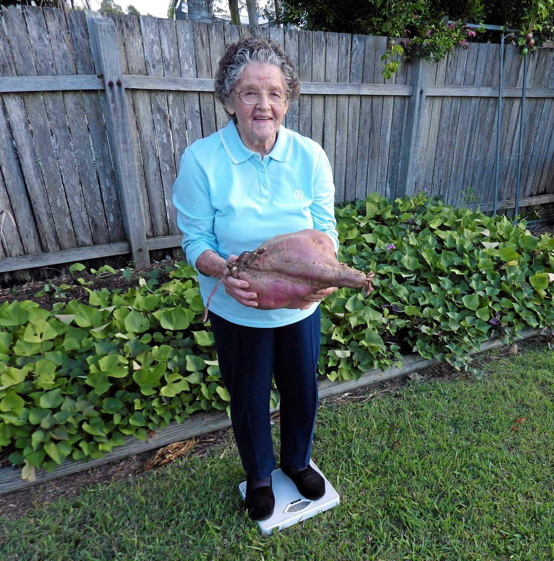 Joyce McMinn from Gays Hill in Casino has grown a 5kg sweet potato.