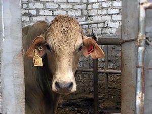 LETTER: Abattoir horrors must force export rethink