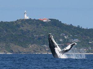 Whale watching season gears up in Byron Bay