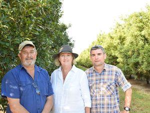 Australian Macadamia Society Bundaberg field day