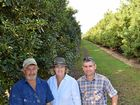 SHARING KNOWLEDGE: Andrew Wallis at his Kinkuna farm. Photo: Eliza Goetze / Rural Weekly