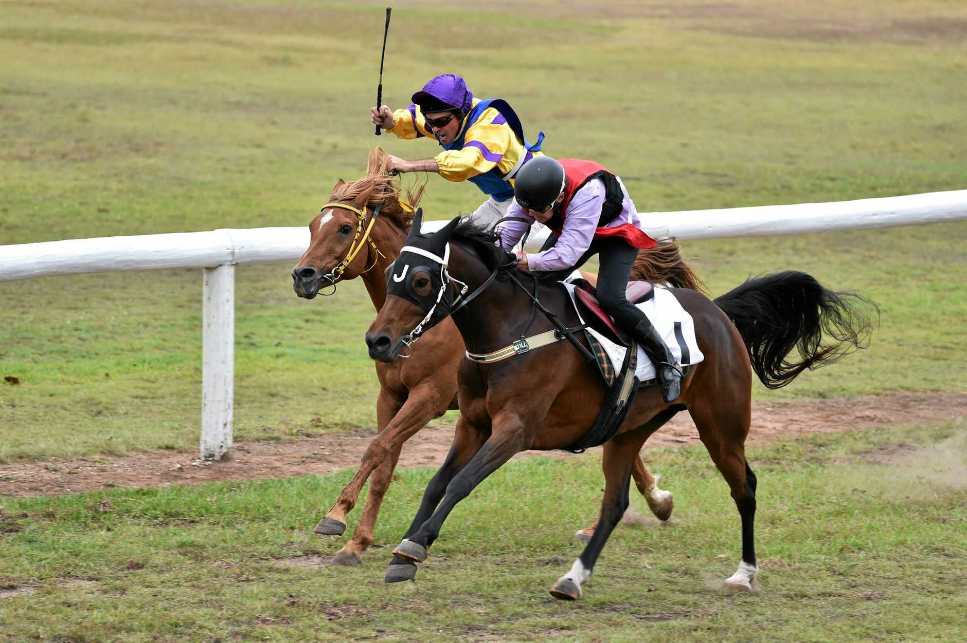 Arabians Set To Star On Historic Clifton Race Day Northern Star
