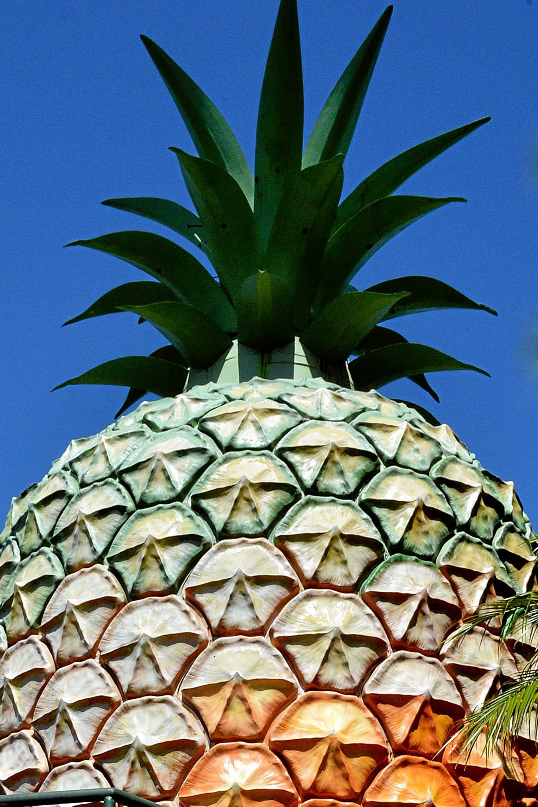 Good Morning Nambour: The Big Pineapple.  Photo: John McCutcheon / Sunshine Coast Daily