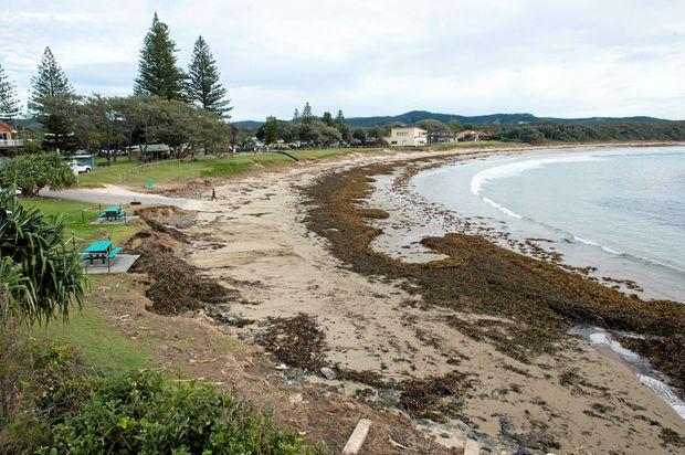 CONCERN: Coastal erosion is evident at Woolgoolga Beach Reserve following the ferocious East Coast Low three weeks ago.