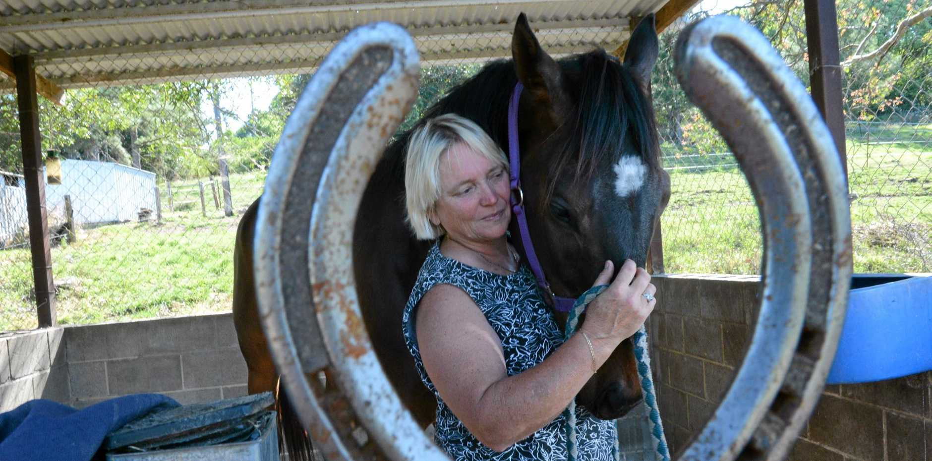 Bingo Bobby is likely to tackle tomorrow's Murwillumbah Cup in preference to the Tygalgah Cup