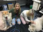 Reporters Trinette Stevens and Madeline McDonald meet colleague Tamara McKenzie's two dogs.