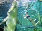 Byron Bay woman Franny Plumridge diving just centimetres from a 5m crocodile.