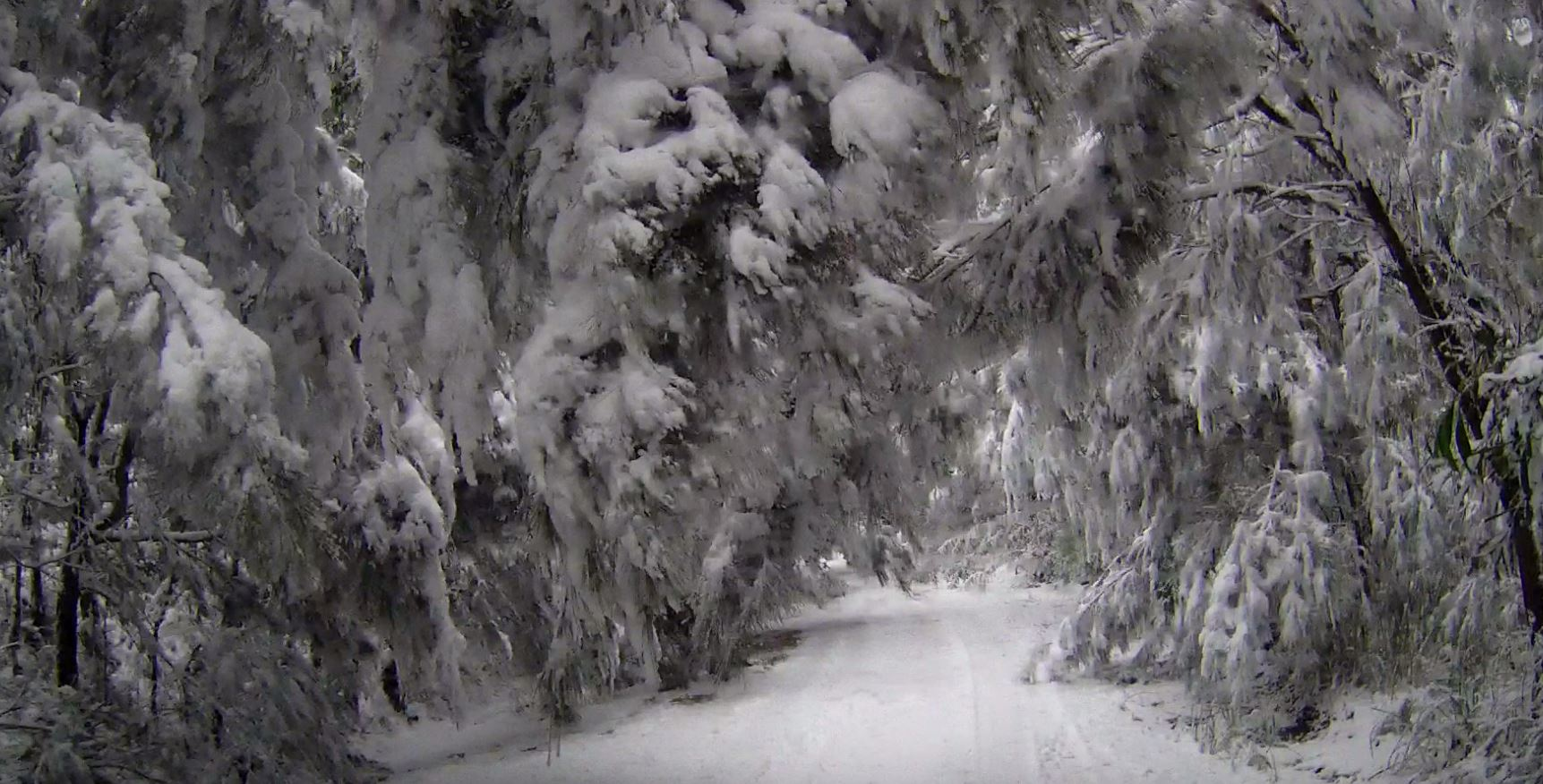 Snow blankets the road through Girraween National Park.