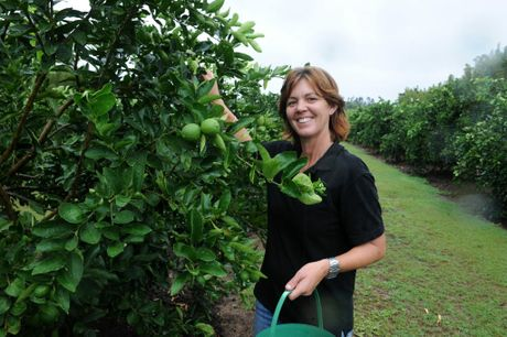 BUNDY LIMES: Linda Vickers in her Gooburrum orchard. Photo: Mike Knott / NewsMail