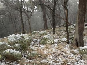 Snow hits the Tenterfield area overnight