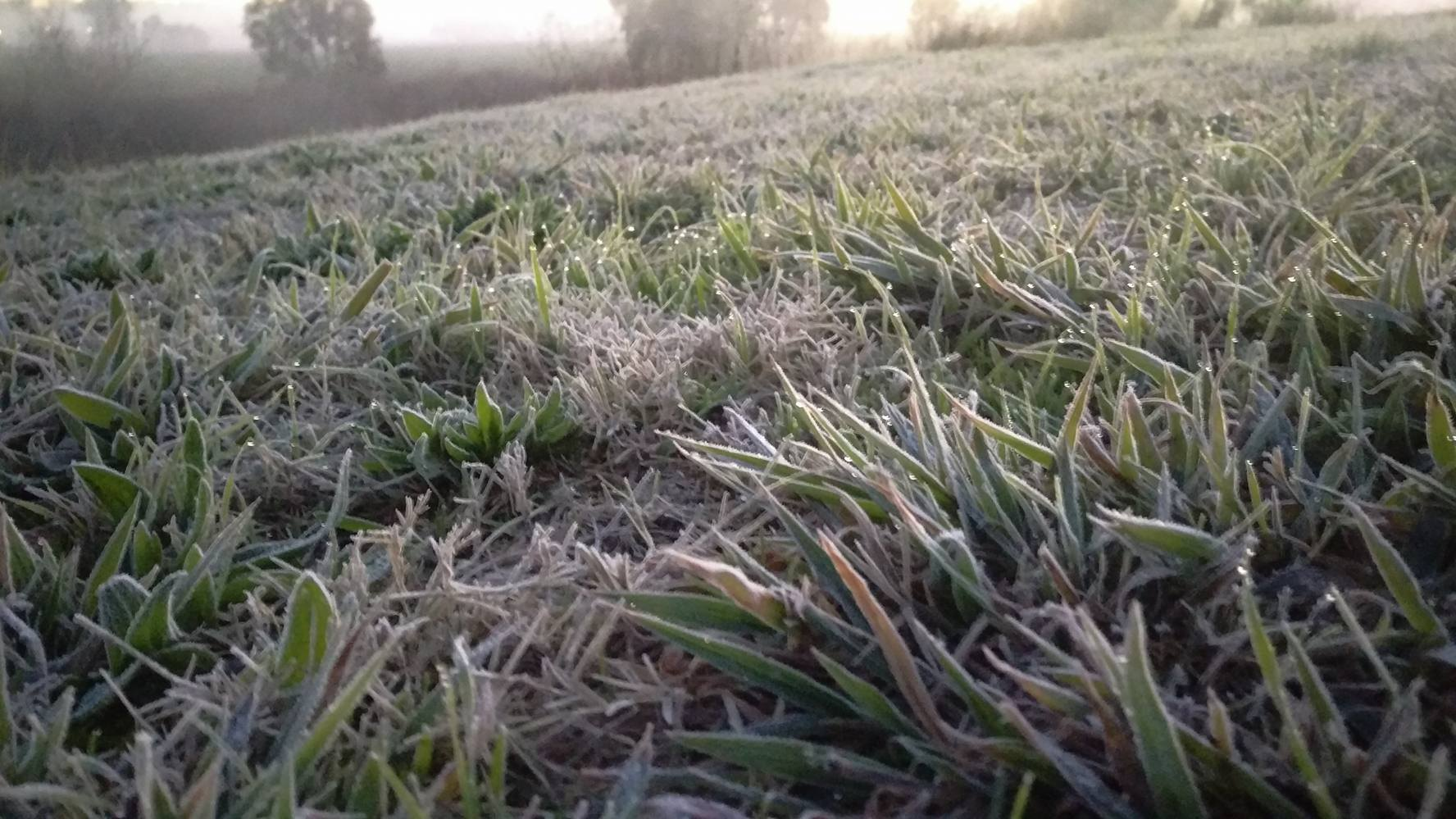 Frost on the ground near the Condamine River this morning in Warwick