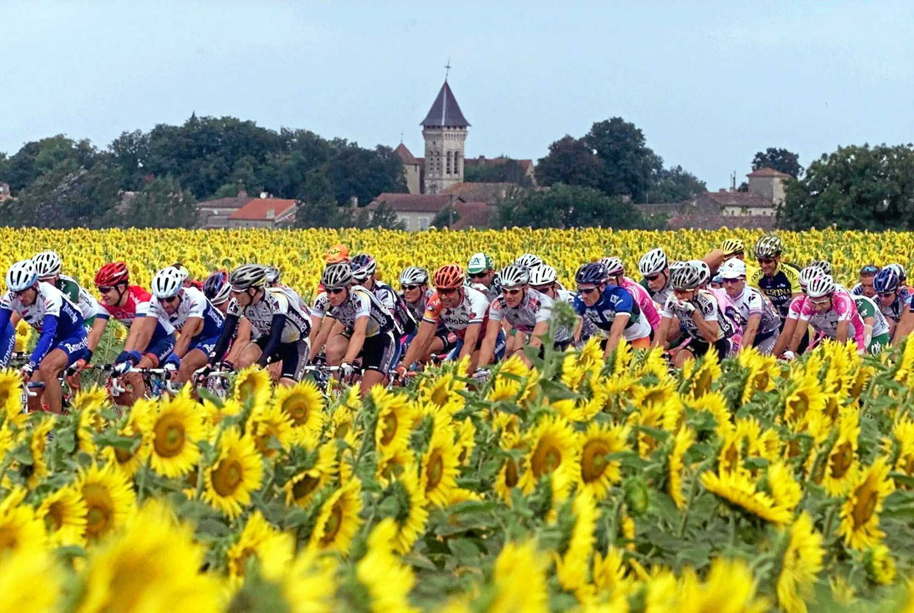 FAMED RACE: The Tour de France pack rides through sunflower fields between Agen and Dax, in south-western France.