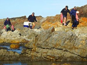 Wild weather brings influx of stranded seals