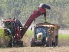 Sugar cane harvesting near Myrtlevale on Friday.Photo Peter Carruthers / Whitsunday Times
